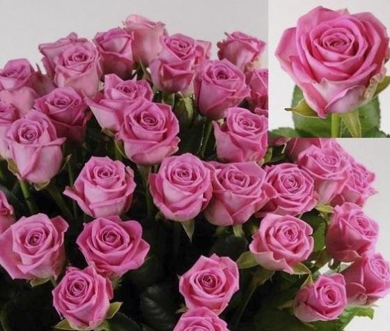 Где можно купить розы оптом в алматы купить бумажные цветы для скрапбукинга магазин гамма