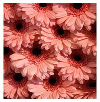 Букет на 8 марта из тюльпанов 30 штук как оформлять, доставка цветов в курске через интернет